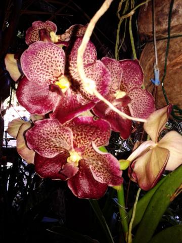 Lors de votre arrivée, de jolies vahine viendront vous accueillir et vous offrir des colliers de fleurs qu'elles auront elles même préparé....Elles vous ouvriront la porte de notre jardin d'Eden et la découverte va commencer....